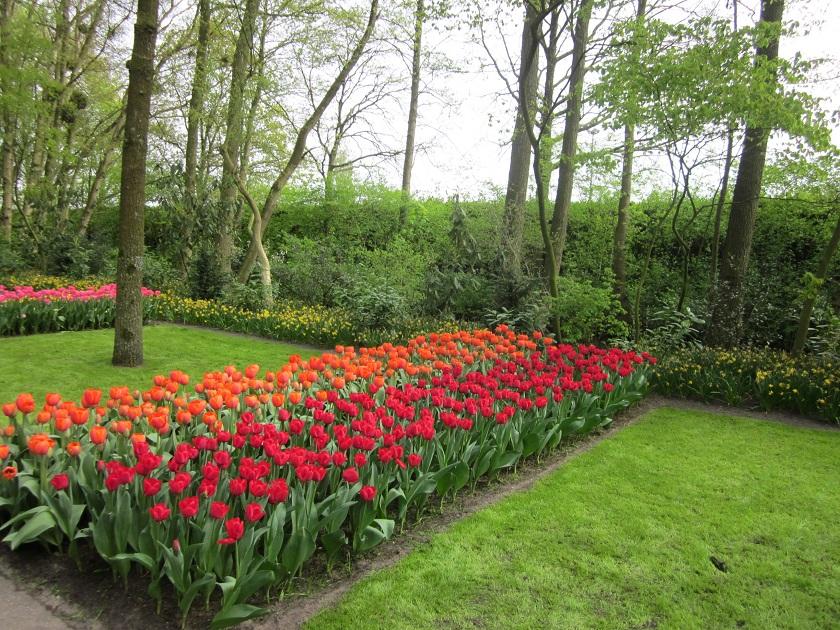 Парк цветов_0514