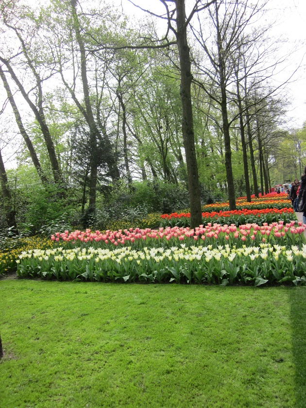 Парк цветов_0516