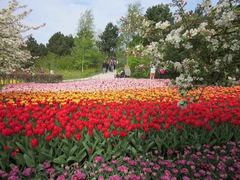 Парк цветов_0632